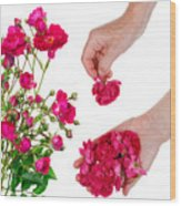 Worker Pick  Flowers Of Pink  Roses Wood Print