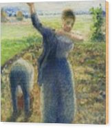 Workers In The Fields 1896-97 Camille Pissarro Wood Print