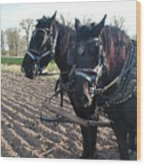 Working Percherons Wood Print