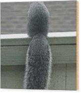 World Class Squirrel Tail Wood Print