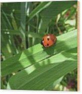 World Of Ladybug 1 Wood Print