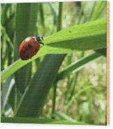 World Of Ladybug 2 Wood Print