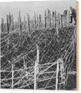 World War I Barbed Wire Wood Print