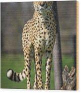 World's Fastest Land Animal Wood Print