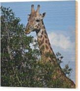 World's Tallest Mammal Wood Print