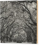 Wormesloe Historic Site Wood Print
