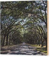 Wormsloe Avenue Wood Print