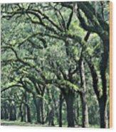 Wormsloe Georgia No. 7668 3 Of 3 Set Color Wood Print