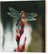 Wornout Dragonfly Wood Print by Susie Weaver