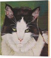 Wozzle - Domestic Cat Wood Print