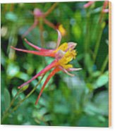Wp Floral Study 3 2014 Wood Print