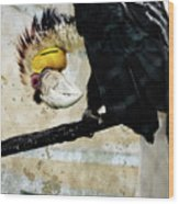 Wreathed Hornbill Perching Against Vintage Concrete Wall Backgro Wood Print