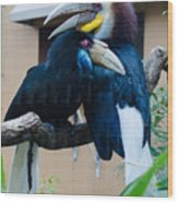 Wreathed Hornbills Wood Print