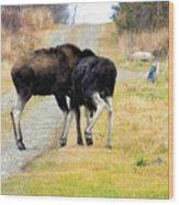 Amorous Moose Wrestling Wood Print