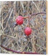 Wrinkled Wild Rose Hips Wood Print