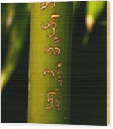 Written Bamboo 01 Wood Print