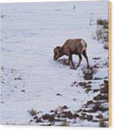 Wyoming Big Horn Wood Print