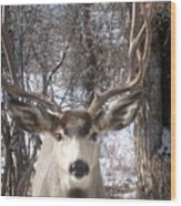 Wyoming Buck Wood Print