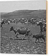Wyoming: Cowboys, C1890 Wood Print