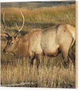 Wyoming Elk Wood Print