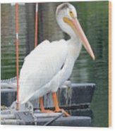 Wyoming Pelican Wood Print