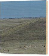 Wyoming Pronghorns Wood Print