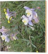 Wyoming Spring  Wood Print