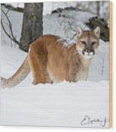 Wyoming Wild Cat Wood Print