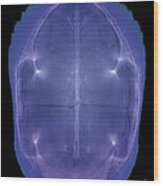 X-ray Of A Turtle Shell Wood Print