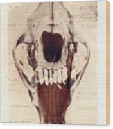 X Ray Terrestrial Wood Print
