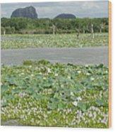 Yala National Park Wood Print