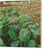 Yams Farm In Azores Wood Print