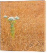 Yarrow Afloat Wood Print