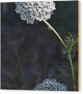 Yarrow In Stages Wood Print