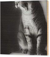 Yawning Wood Print