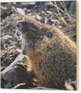 Yawning Marmot Wood Print