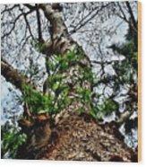 Ye Ole Tree At Chichen Itza Wood Print