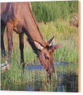 Yearling Elk Wood Print