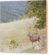 Yearling Mule Deer In The Pike National Forest Wood Print