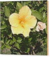Yello Hibiscus Wood Print