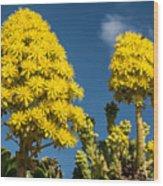 Yellow Aeonium Wood Print