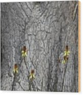Yellow Aloe Flowers And Tree Wood Print