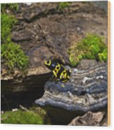 Yellow And Black Dart Frog Wood Print