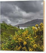 Yellow Flowers And Grey Clouds, Stormy Weather Over Sea In Scotland. Wood Print