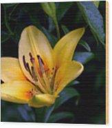 Yellow And Green No. 2 Wood Print
