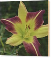 Yellow And Marron Flowering Lily In A Garden Wood Print