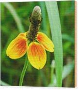 Yellow And Orange Clasping Coneflower Wood Print