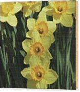 Yellow And Orange Daffodil  #2 Wood Print