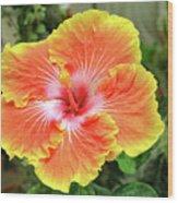 Yellow And Orange Hibiscus 2 Wood Print