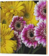 Yellow And Pink Gerbera Daisies Wood Print